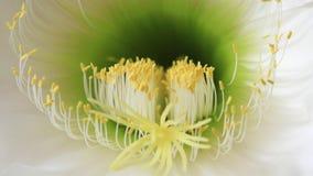 Detalle de la macro de la floración de la flor almacen de metraje de vídeo