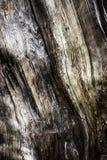 Detalle de la madera putrefacta añeja vieja Fotos de archivo
