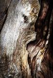Detalle de la madera seca quebrada Fotos de archivo