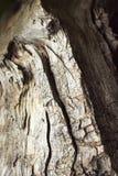 Detalle de la madera vieja quebrada Fotografía de archivo