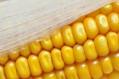 Detalle de la mazorca de maíz Foto de archivo