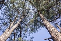 Detalle de la naturaleza de los árboles Fotos de archivo libres de regalías