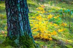 detalle de la naturaleza del otoño Imagenes de archivo