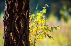 detalle de la naturaleza del otoño Foto de archivo libre de regalías