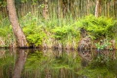 Detalle de la orilla del lago Fotografía de archivo libre de regalías