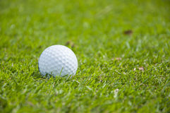 Detalle de la pelota de golf en hierba Fotos de archivo libres de regalías