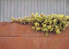 Detalle de la pequeña planta verde Foto de archivo libre de regalías