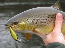 Detalle de la pesca de la pista de la trucha Foto de archivo libre de regalías