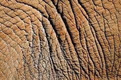 Detalle de la piel del elefante Fotos de archivo