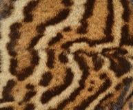 Detalle de la piel del ocelote Imágenes de archivo libres de regalías