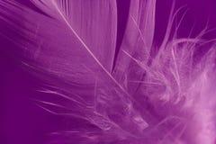 Detalle de la pluma Imagen de archivo libre de regalías