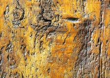 Detalle de la puerta antigua en madera sólida Fotografía de archivo libre de regalías