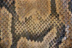 Detalle de la textura de la serpiente Fotografía de archivo