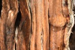 Detalle de la textura del fondo del tronco del enebro Imagen de archivo