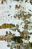 detalle de la textura de un árbol fotos de archivo