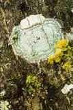 detalle de la textura de un árbol fotos de archivo libres de regalías