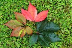 Detalle de las hojas coloridas del otoño hermoso Fotografía de archivo