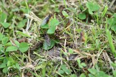 Detalle de las hormigas del vuelo fotos de archivo