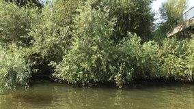Detalle de las orillas del río de Ljubljanica metrajes
