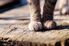 Detalle de las patas del gato gris Imagenes de archivo