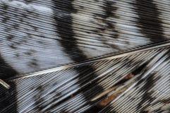 Detalle de las plumas de un pájaro en las montañas de Adirondack de nuevo Yor imágenes de archivo libres de regalías