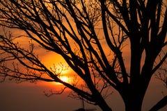Detalle de las ramas de árbol en puesta del sol Fotografía de archivo libre de regalías