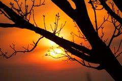 Detalle de las ramas de árbol en puesta del sol Imagen de archivo