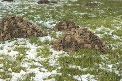 Detalle de las toperas hechas por los topos Son molestos porque daña la hierba del jardín foto de archivo libre de regalías