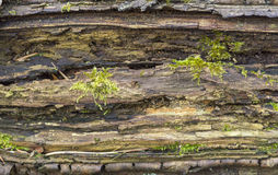 Detalle de madera de descomposición imagen de archivo libre de regalías