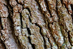 Detalle de madera de la corteza Foto de archivo