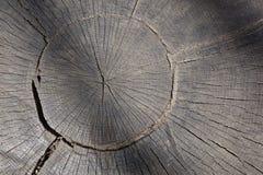 Detalle de madera del grano del extremo foto de archivo