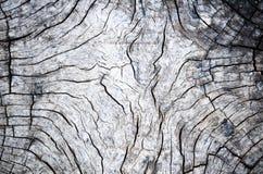 Detalle de madera. La madera vieja es al aire libre localizado Fotos de archivo libres de regalías