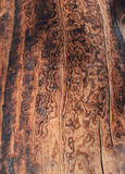 Detalle de madera quemado Fotografía de archivo libre de regalías