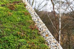 Detalle de piedras en la vegetación viva verde extensa del tejado cubierta Fotografía de archivo
