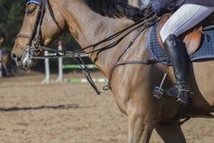 Detalle de salto de la demostración del caballo Foto de archivo libre de regalías