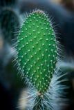 Detalle de un cactus espinoso imagenes de archivo