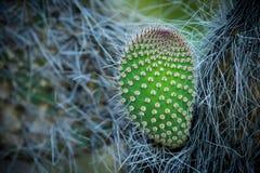 Detalle de un cactus espinoso fotos de archivo