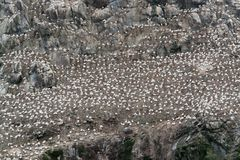 Detalle de un refugio de aves en siete islas Imagen de archivo libre de regalías
