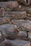 Detalle de un tronco de palmera Imagen de archivo