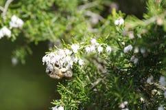 detalle de una abeja Fotografía de archivo
