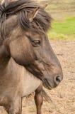 Detalle de una cabeza del ` s del caballo imagen de archivo
