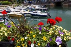 Detalle de una caja colorida de la flor con el puerto interno de Dartmouth Dartmouth, Devon, Inglaterra Imágenes de archivo libres de regalías