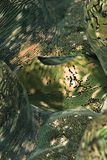 Detalle de una capa de la almeja gigante estriada. Imagenes de archivo