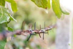 Detalle de una cerca oxidada del alambre de púas en la naturaleza borrosa Imágenes de archivo libres de regalías