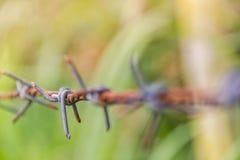 Detalle de una cerca oxidada del alambre de púas en la naturaleza borrosa Fotos de archivo