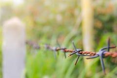 Detalle de una cerca oxidada del alambre de púas en la naturaleza borrosa Imagen de archivo