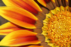 Detalle de una flor Foto de archivo libre de regalías