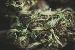 Detalle de una flor de la marijuana foto de archivo