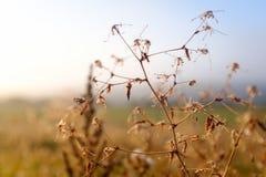 Detalle de una hierba fotos de archivo