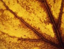 Detalle de una hoja amarilla vieja imágenes de archivo libres de regalías
